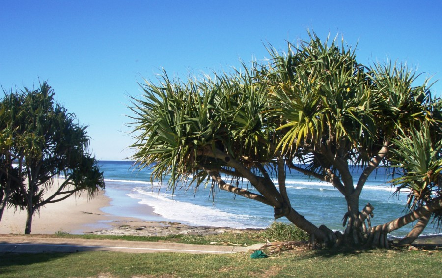 Shelly Beach
