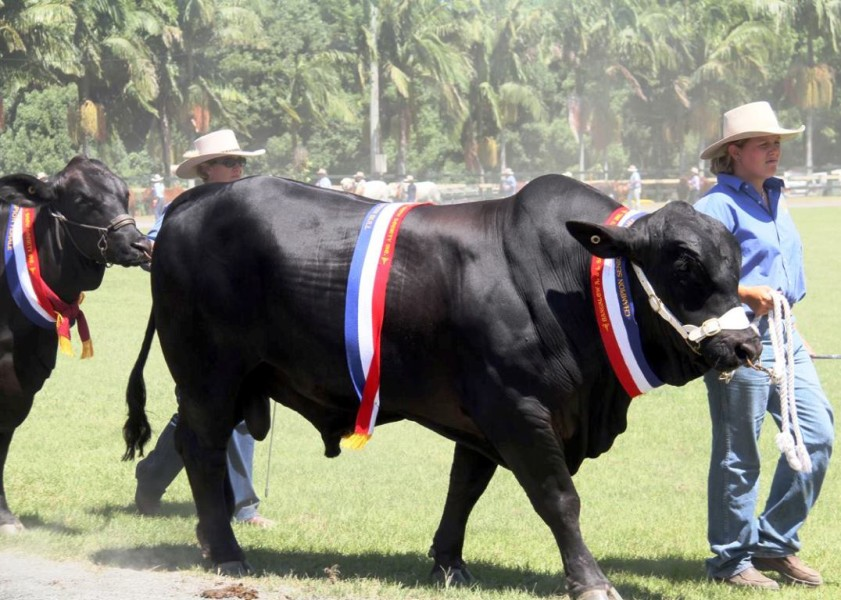 The Bangalow Show - Livestock Competition