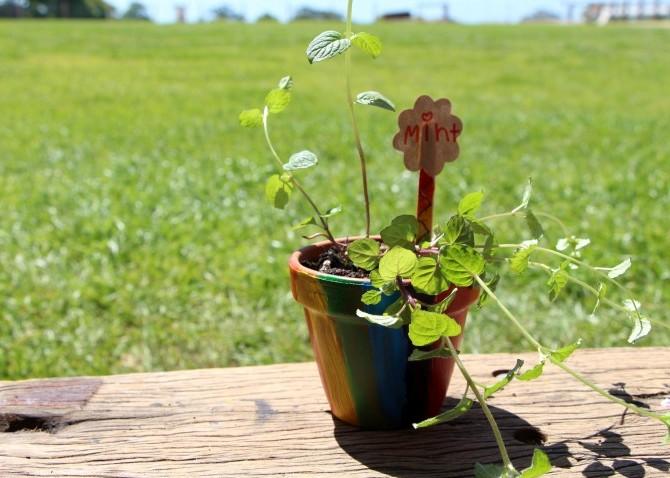 FarmKids Workshop - Herbs