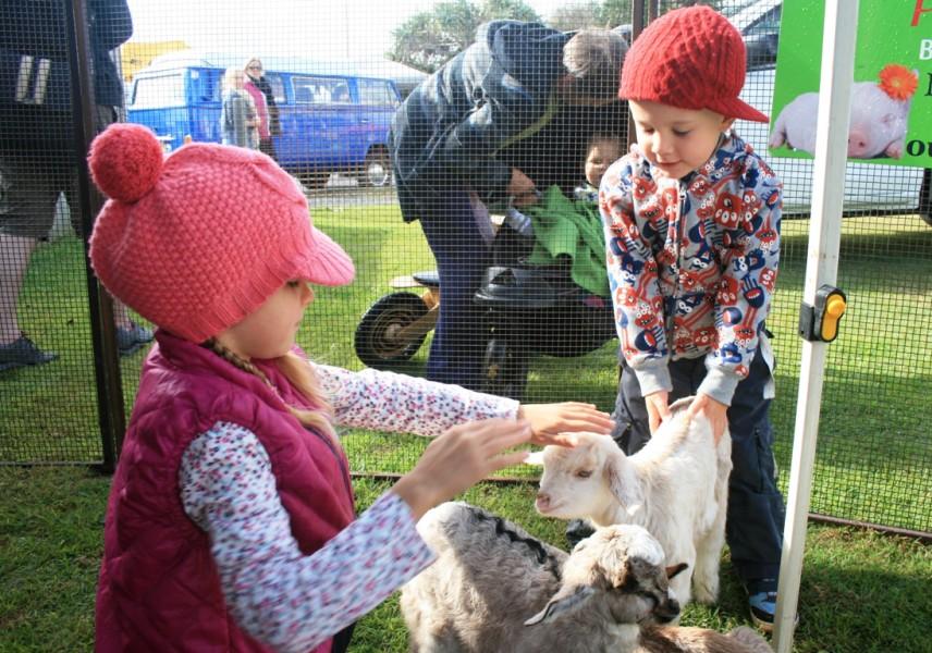 Love Lennox Festival - Farm animals