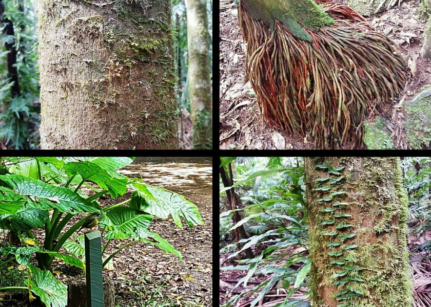 Protesters Falls Walking Track - rainforest features