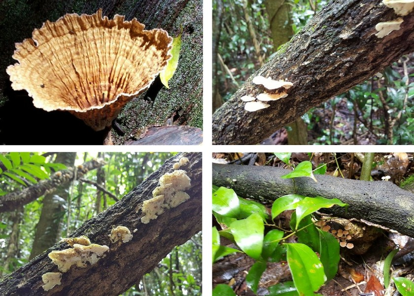 Booyong Nature Reserve - Various Funghi