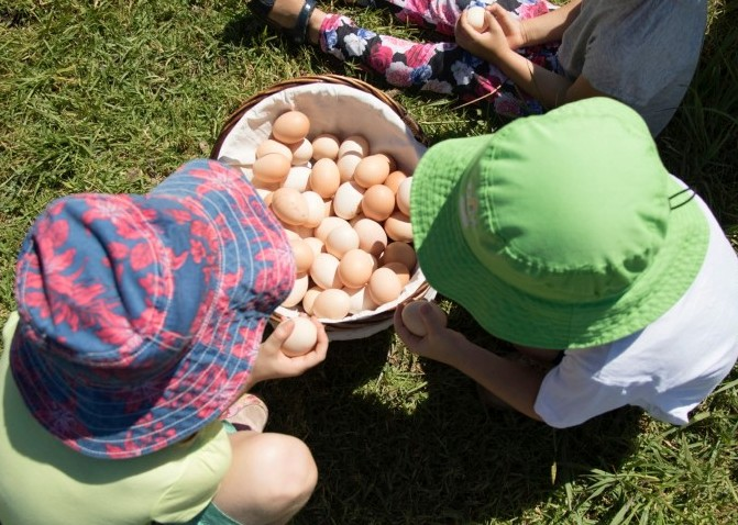 FarmKids Workshop - collecting eggs